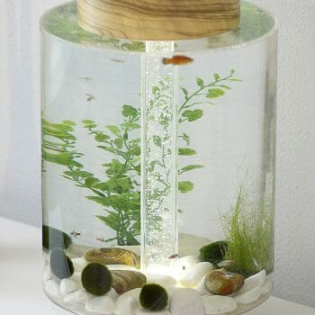 Norrom Aquarium with Olivewood Lid and Base