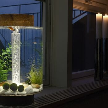 Norrom Aquarium with Dark Mahogany Lid and Base